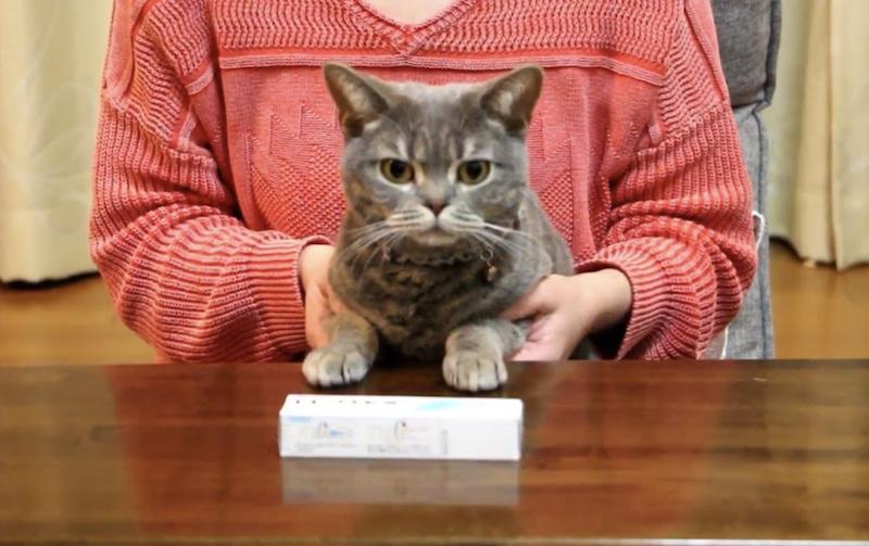 猫ニキビ治療 ヒビクス軟膏と猫