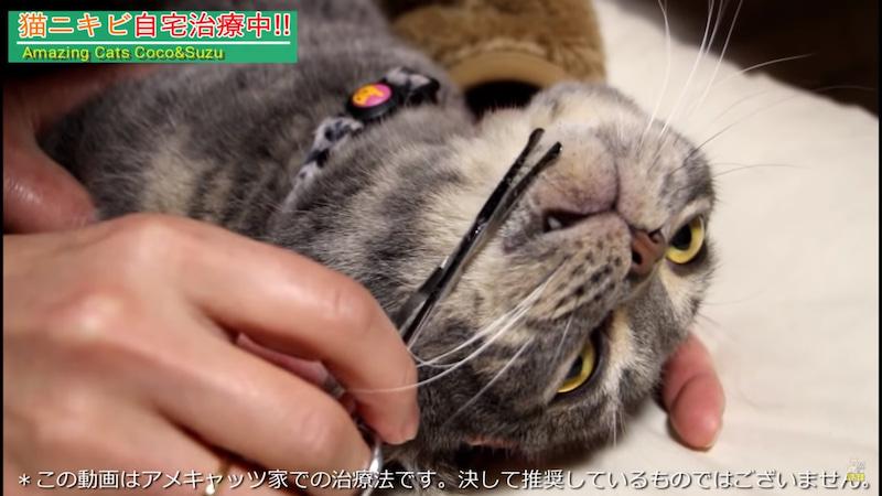 方 治し 猫 ニキビ 顎 猫の顎に黒いブツブツが!うちの子もなった!猫ニキビとは?