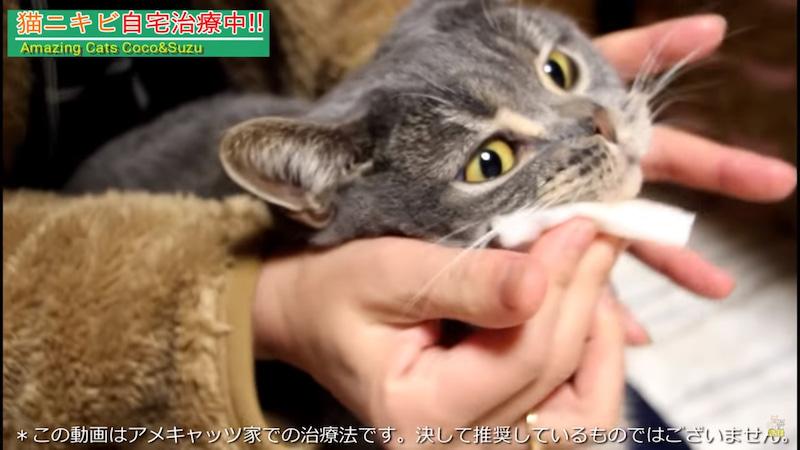 猫ニキビ治療 顎を消毒