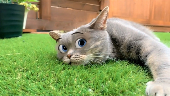 ペットの猫だってディズニー顔になれる?アプリで大変身したら大爆笑