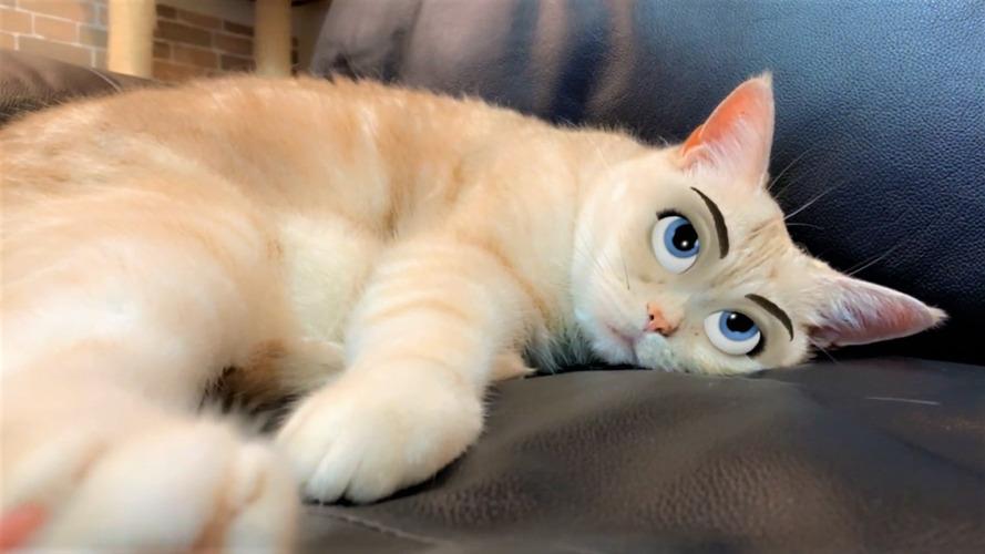 ペットの猫だってディズニー顔になれるアプリで大変身しました