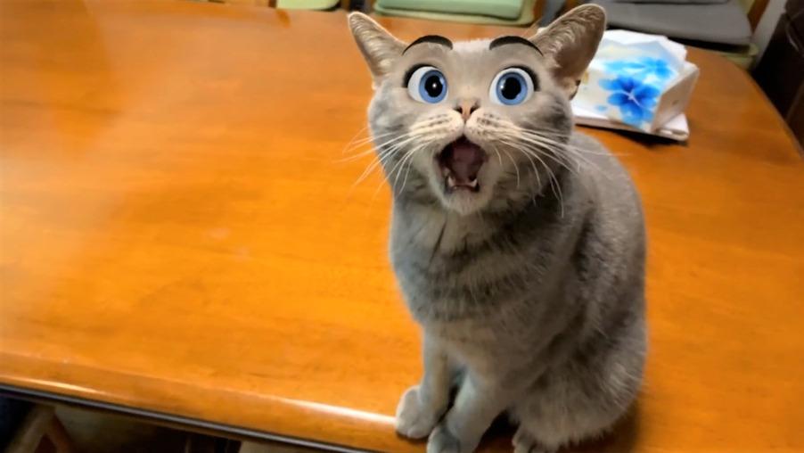 ペットの猫だってディズニー顔になれるアプリで大変身